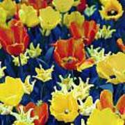 Tulips Blue Poster