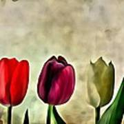 Tulips Color Poster