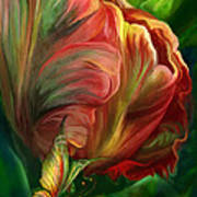 Tulips - Colors Of Paradise Poster