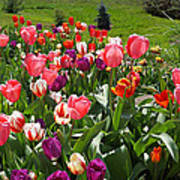 Tulips Garden Art Prints Colorful Spring Floral Poster