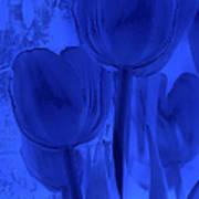 Tulips In Cobalt Blue Poster