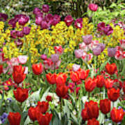 Tulips In St James's Park, London Poster