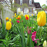 Tulips In Williamsburg Poster