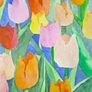Tulips Multicolor Poster
