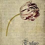 Tulips - S01bt2t Poster