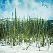 Tundra Forest Poster by Priska Wettstein