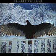 Turkey Vulture Sunning Poster