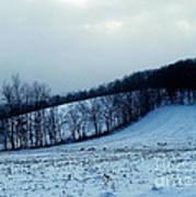 Turkeys In A Winter Field Poster