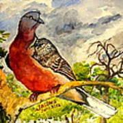 Turtle - Dove Poster