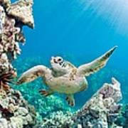 Turtle In Tropical Ocean Poster