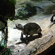Turtle - National Aquarium In Baltimore Md - 121218 Poster