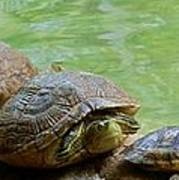 Turtle Ninjas Poster