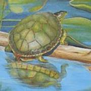 Turtle On A Log Poster