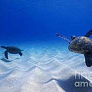 Turtle Pair Poster