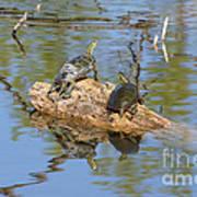 Turtles On Stump Poster