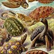 Turtles Turtles And More Turtles Poster
