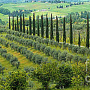 Tuscan Panoramic 3 Poster