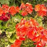 Tuscany Flower Garden Poster