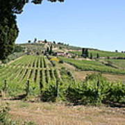 Tuscany Vineyard II Poster