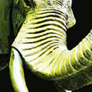 Tusk 1 - Dramatic Elephant Head Shot Art Poster by Sharon Cummings