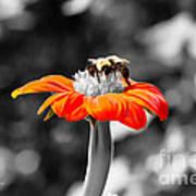 Tweedle Bumble And Tweedle Bee Poster