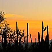 Twilight After Sunset Sonoran Desert Poster
