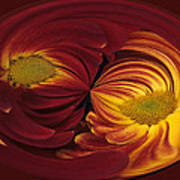 Twin Gerbera Abstract Poster