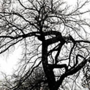 Twisted Tree In Black And White Poster