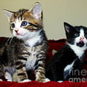 Two Adorable Kittens Poster