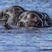 Two African Elephants Swimming In The Chobe River Poster