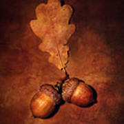 Two Brown Acorns Poster