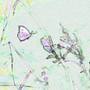 Two Butterflies Poster