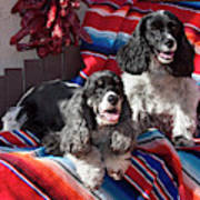 Two Cocker Spaniels Together Poster