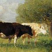 Two Cows In A Meadow Poster