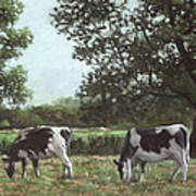 Two Cows In Field At Throop Dorset Uk Poster