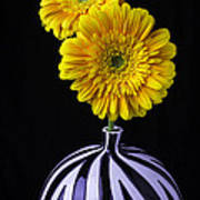 Two Daises In Striped Vase Poster