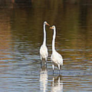 Two Egrets In The Pond Poster