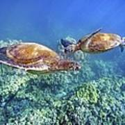 Two Green Turtles Poster