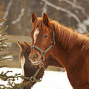 Two Horses In Winter Day Poster