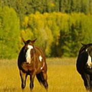 Two Horses Walking Along Poster