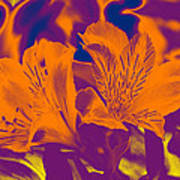 Two Lilies Gradient Poster