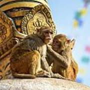 Two Macaques On Top Of Chorten Poster