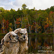 Two Owlets At A Lakeshore Poster