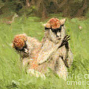 Two Patas Monkeys Erythrocebus Patas Grooming Poster