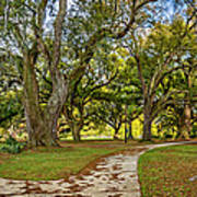 Two Paths Diverged In A Live Oak Wood...  Poster