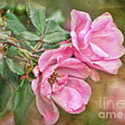 Two Pink Roses I  Blank Greeting Card Poster