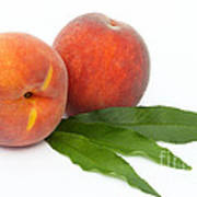 Two Ripe Peaches And Leaves Poster