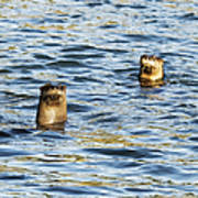 Two River Otters Poster
