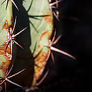 Two Shades Of Cactus Poster