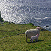 Two Sheep On The Cliffs At Sleive League - Donegal Ireland Poster